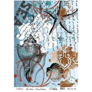 Reispapier Cadence Muscheln Seesterne DIN A3